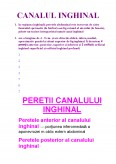 Imagine document Canalul inghinal si peretele abdominal