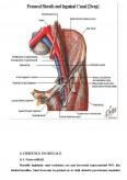 Imagine document Ingrijirea Pacientului cu Hernie Inghinala