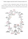Celula si Ciclul Krebs