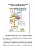 Imagine document Metabolismul Glucidic