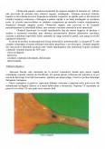 Aspecte ale ingrijirii pacientului cu ciroza hepatica