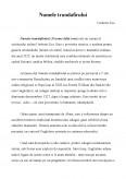 Imagine document Recenzie - Numele Trandafirului - Umberto Eco