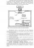 Material de Studiu ID - Apicultura Sericicultura si Zoologie