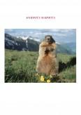 Imagine document Marmota - Anatomie si Fiziologie
