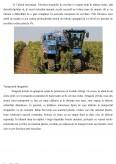 Tehnologia de obtinere a vinurilor albe - Analiza senzoriala si fizico-chimica