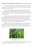 Imagine document Proiectarea unei linii tehnologice pentru obtinerea conservelor de mazare